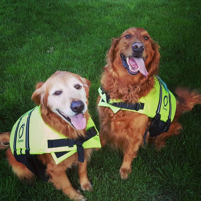 dog-life-jackets